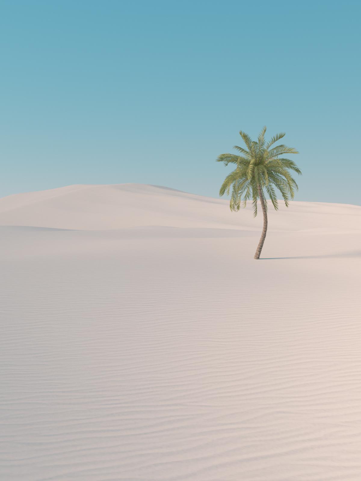 sand_landscpape_palm